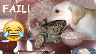 Try Not To Laugh Challenge - Funny Animal Cats and Dogs Fails Compilation #2 | Top Viners