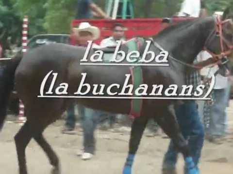 carreras de caballos en ixhuatan la dama vs el escalibu vs la beba