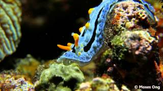 Underwater world of Anilao (4K) - 2015