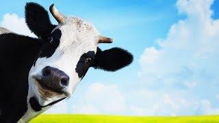 Les animaux de la ferme : La vache