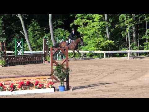 Sale Horse, and Search horse show 039
