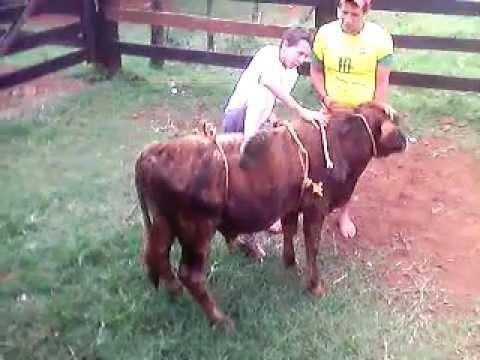 Rodeio em touros pbr 2012 Cassio vs Choquito.avi