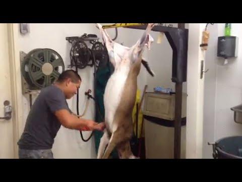 Fastest Deer Skinner In The World