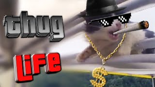 Unexpected Thug Life Cat