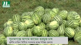 Advance watermelon cultivation in Sunamganj