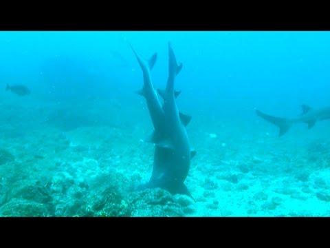 Sharks wild sex