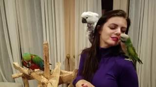 My parrots reaction after not seeing me for ten days! Rocky waves!! | PARRONT TIP TUESDAY