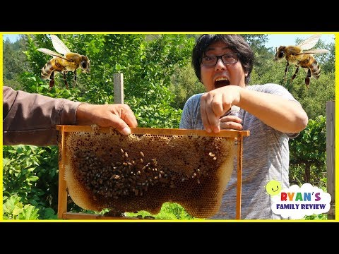 First Time Seeing Bees In Real Life with Ryan s Family Review