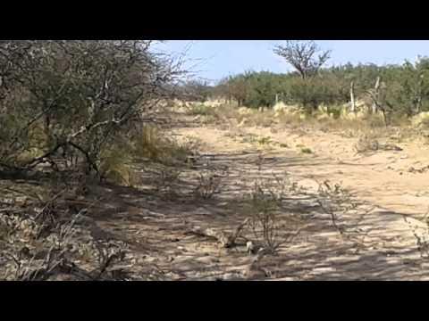 Picahuesos en el monte lo lindo de cazar