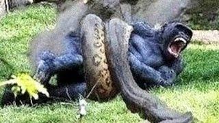 Monkey vs Anaconda vs Snake vs Leopards vs Deer vs Crocodile Most Amazing Wild Animal Fights