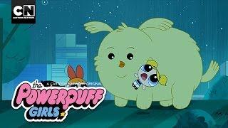 The Powerpuff Girls | Cheepy Returns Home | Cartoon Network