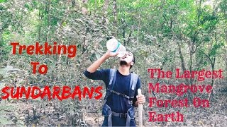 Trekking to Sundarbans  The Largest Mangrove Forest On Earth