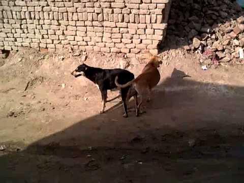 animal fukking vidio