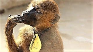 11 Weird Ways Animals Communicate