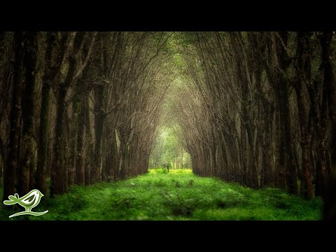 Xxx Mp4 Relaxing Celtic Music Harp Music Peaceful Music Soothing Music Calming Music ★85 3gp Sex