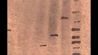 09   Tomas Rubeck   Teal mp3