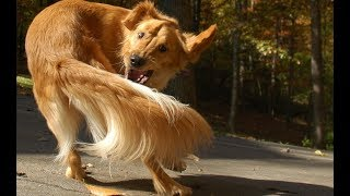 The Real Explanation Behind These 10 Weird Dog Behaviors