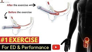 🤷🏼♂️ #1 Exercise For Preventing Erectile Dysfunction & Improving Your Performance  In The Bedroom