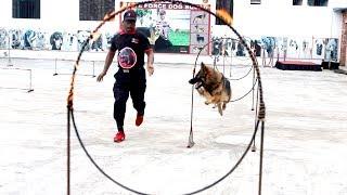কুকুর প্রশিক্ষণ    Dog Training Session    ডগ স্কোয়াডের প্রশিক্ষণ