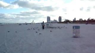 """""""Gaviotas"""" em Miami Beach"""