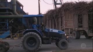 Seca prejudica lavoura de cana-de-açúcar no Nordeste do Brasil