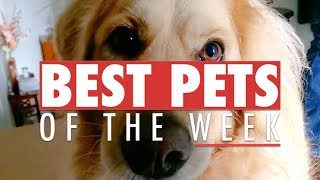 Best Pets of the Week Video Compilation   September 2017