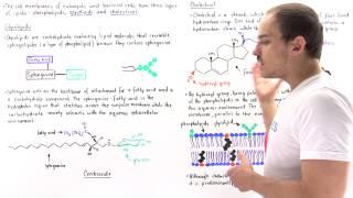 Glycolipids and Cholesterol