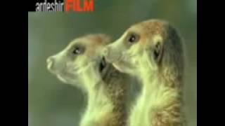 صداگذاری روی حیوانات