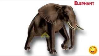 Children s Favorite Animals Learning English Animal Names Kids Learning Video Learn Animals