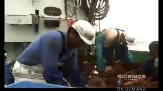 Incredible Jellyfish   Animals Documentary HD 2015