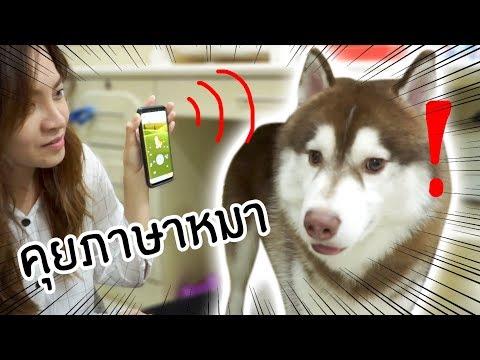 Xxx Mp4 ลองใจหมา 5 หมาฟังภาษาคนรู้เรื่องมั้ย ลองใช้appแปลภาษาหมา 3gp Sex