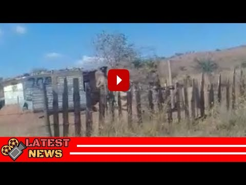 Xxx Mp4 ZCC Moholo Running Around Naked After Burning Church Uniform 3gp Sex