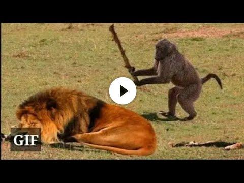 Xxx Mp4 Funny Animals Funny Vedio 3gp Sex
