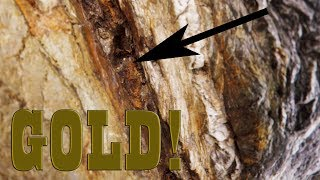We found VISIBLE GOLD EVERYWHERE!!!