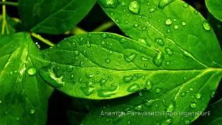 Anantha Paravasathil Sholinganalluril (Tamil Devotional Song)
