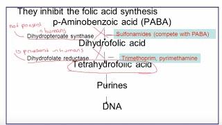 Microbials and Antibiotics: Part 2