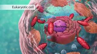Biology: Cell Structure (with Joanne Jezequel)