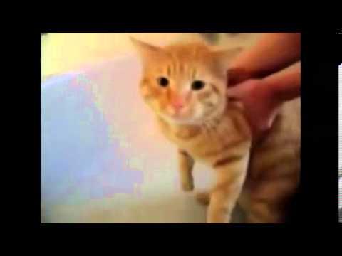 davut diyen kedi videosu  59saniye