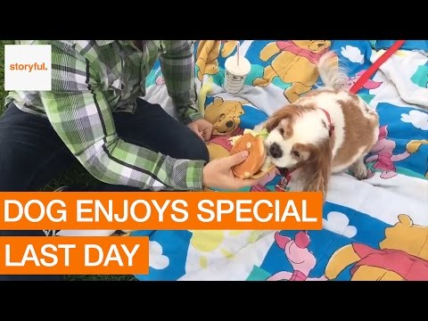Sick Dog Gets Treated Like a Prince For His Last Day