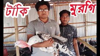 টার্কি  মুরগির খামার যেভাবে শুরু করবেন এবং মাসে লক্ষ লক্ষ টাকা আয় করবেন।turkey farming in bangladesh