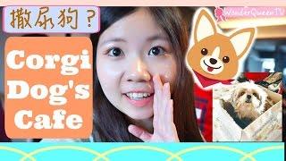 [槟城美食、必玩] 撒尿狗,尿布狗~ 超好吃的限量咸蛋松饼!The Secret Life of Pets   Penang Corgi Dog Cafe