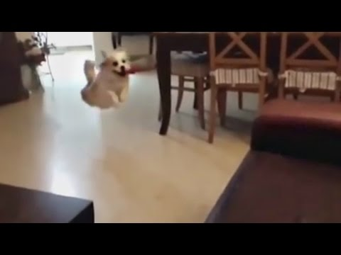 DOGS FETCH FAIL COMPILATION 2015! HD (FUNNY!)