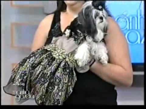 Roupas de Luxo para cães Samira Sarti Estilista Tv Gazeta