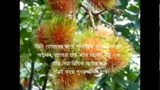 Surah Mulk  (রাজত্ব) (mishari al afasi) with bangla translation