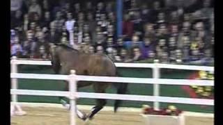 Chacco's Son - Elite Stallions