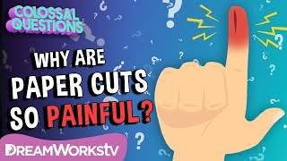 Why Do Paper Cuts Hurt So Much? | COLOSSAL QUESTIONS