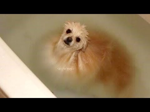 Xxx Mp4 FUNNY DOGS WATER You LAUGH Funny DOG VIDEOS Compilation 3gp Sex