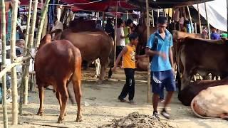 QURBANI SONG 2017,(selfe leleleleel prody)Eid -ul-azha||poltibuz||গরু হাম্বা