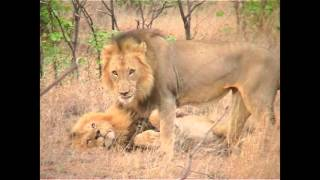 Our Africa Wildlife Experience 2001-2016 part 3 movie