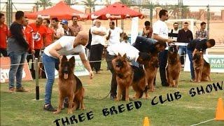 GERMAN SHEPHERD DOG SHOW IN EGYPT مسابقة كلاب الجيرمن شيبرد